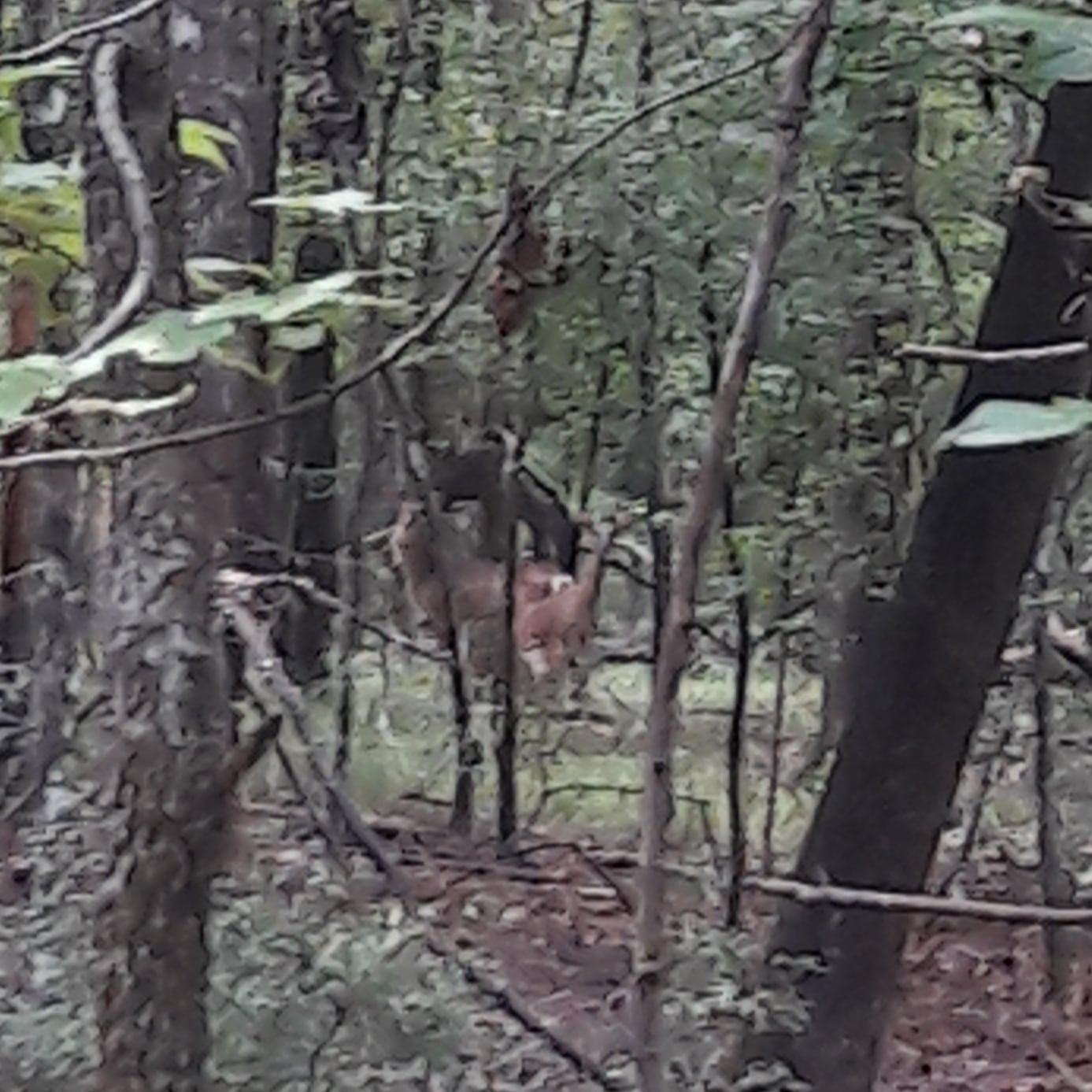 Deer Hiding.jpg